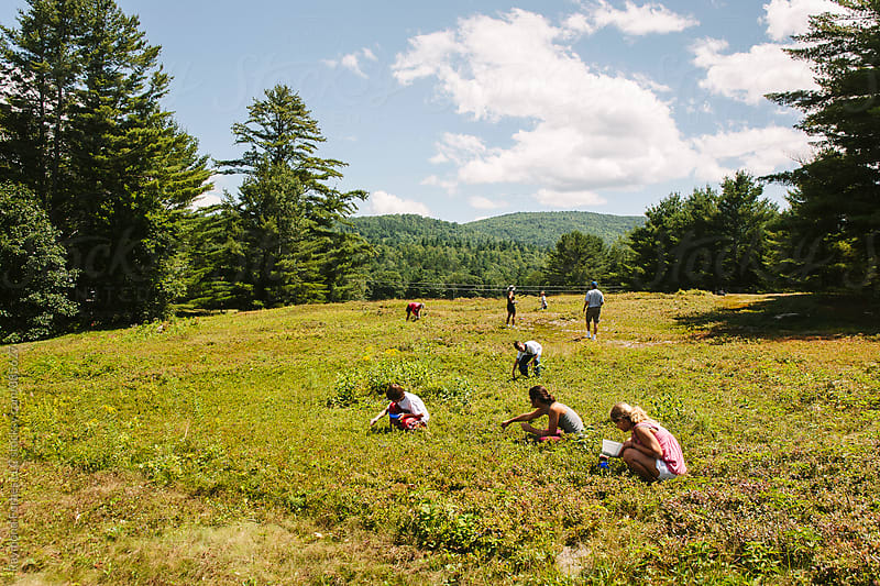 Family Picking Wild Blueberries in Maine by Raymond Forbes LLC for Stocksy United
