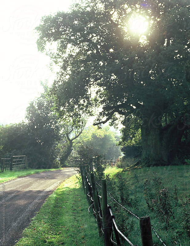 A large oak tree beside a country path with estate fencing. by Helen Rushbrook for Stocksy United