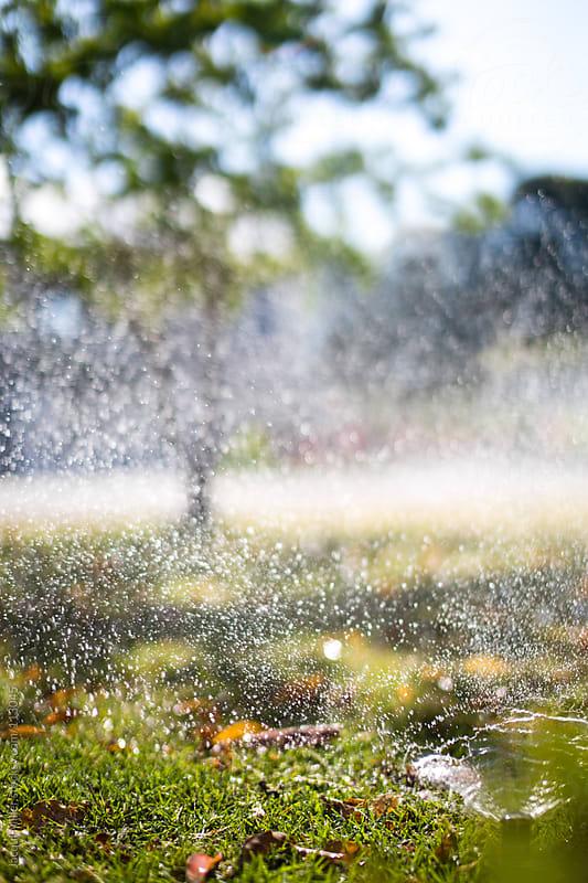 Sprinkler by Jacqui Miller for Stocksy United