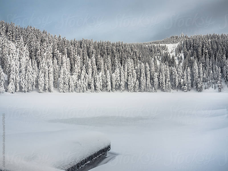 Lake and forest covered with thick snow  by Andreas Wonisch for Stocksy United