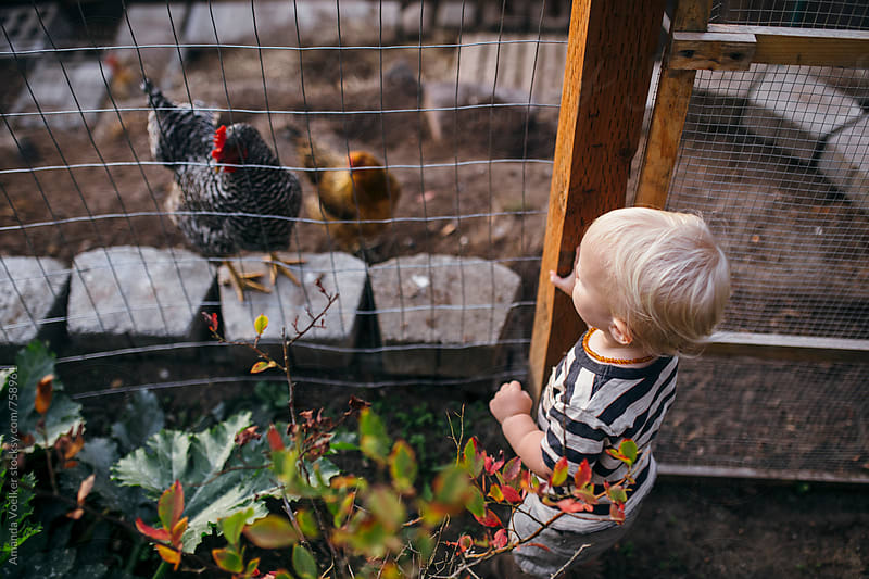 A Toddler Boy and Chicken Watch Each Other Through A Fence by Amanda Voelker for Stocksy United