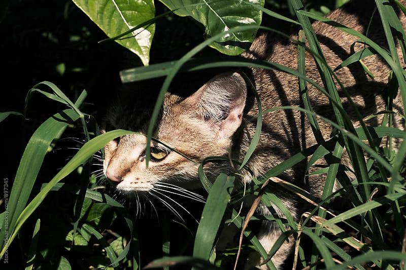 Exploring cat by StockvanSaar for Stocksy United