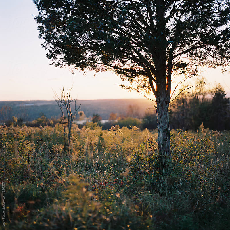 The sun sets behind a tree in a field in autumn at dusk by Joey Pasco for Stocksy United