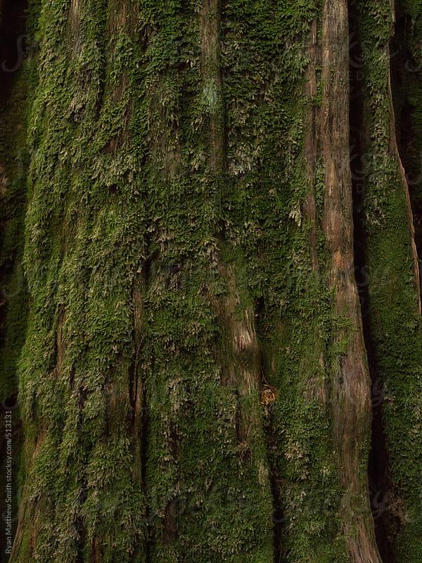 Moss, Evergreen by Ryan Matthew Smith for Stocksy United
