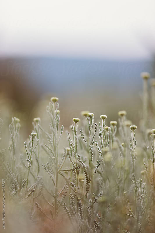 plants and flowers on a cloudy day by Javier Pardina for Stocksy United