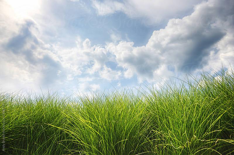 Sky Grass by Andy Brandl for Stocksy United