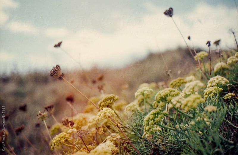 Wild flowers by Kara Riley for Stocksy United