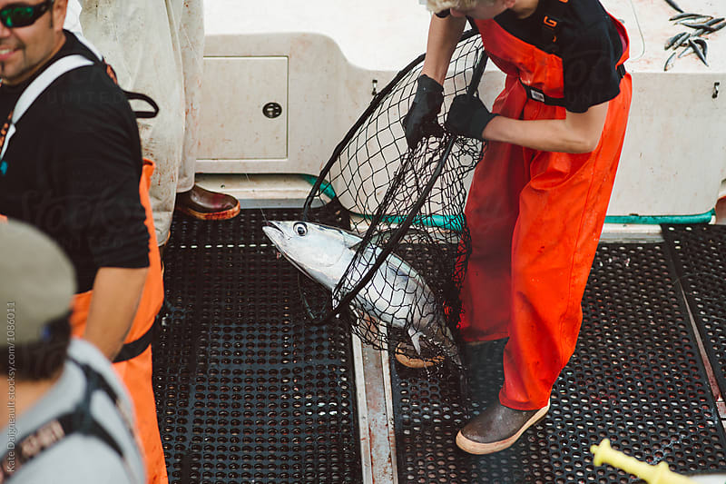 Young fisherman lands tuna on deck of boat with net by Kate Daigneault for Stocksy United