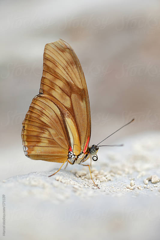 Butterfly on a piece of rock by Marcel for Stocksy United