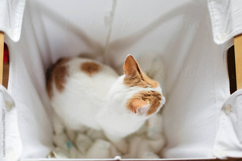 Overhead shot of cat sitting inside laundry basket by Laura Stolfi for Stocksy United