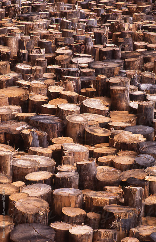 cut trees timber lumber stacked in a yard for processing by Ron Mellott for Stocksy United