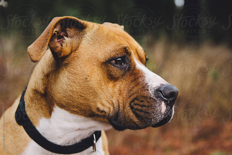 Close up of mixed breed dog's profile by Justin Mullet for Stocksy United