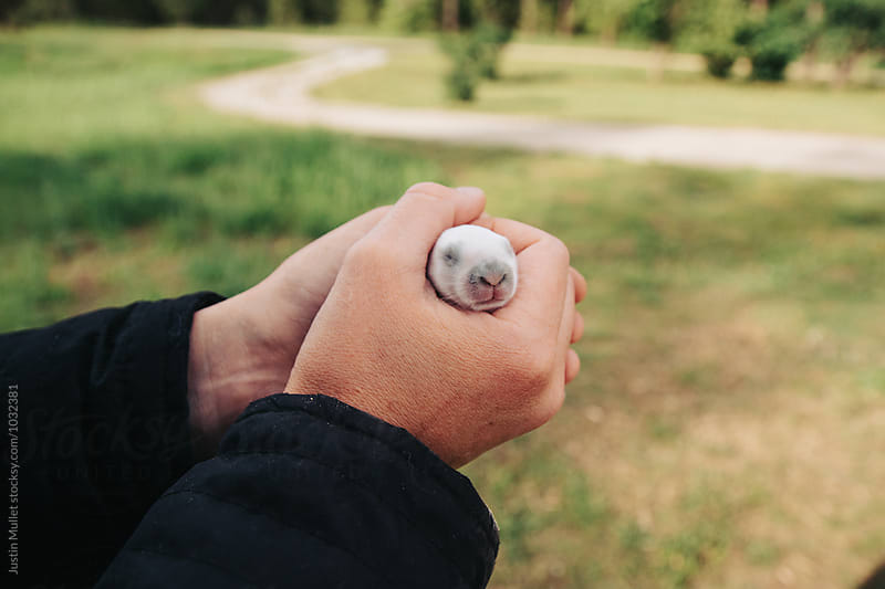 Tiny bunny poking it's head out in between a woman's hand.  by Justin Mullet for Stocksy United