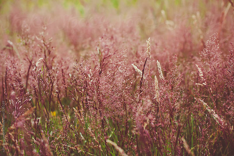 Tall grass by sally anscombe for Stocksy United