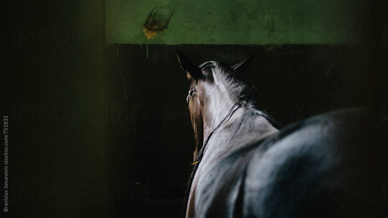 Horse in the Stable by Brkati Krokodil for Stocksy United