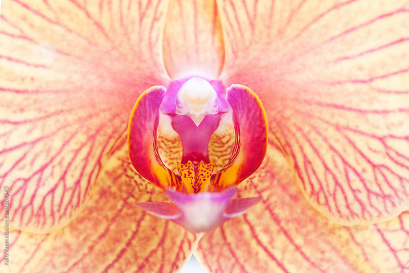 close up image of an orchid by Kelly Knox for Stocksy United