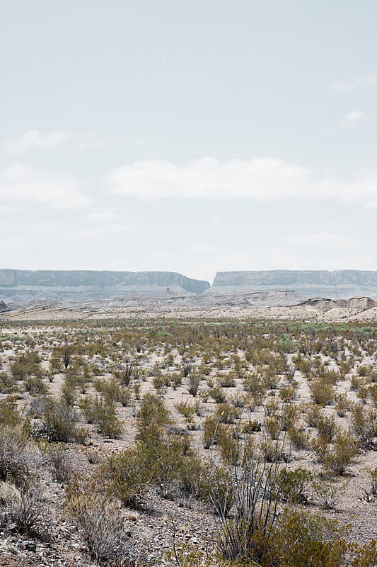 The Chihuahuan Desert in Big Bend National Park by Jack Sorokin for Stocksy United