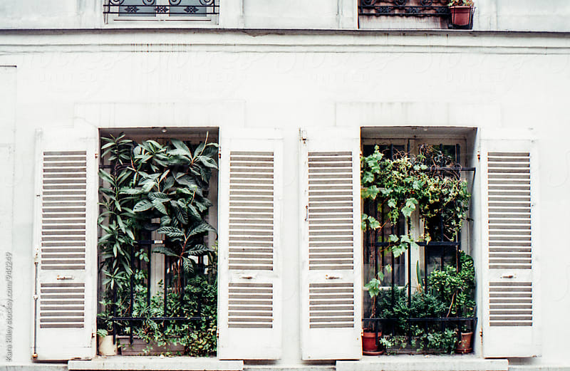 Plants outside window with french shutters by Kara Riley for Stocksy United