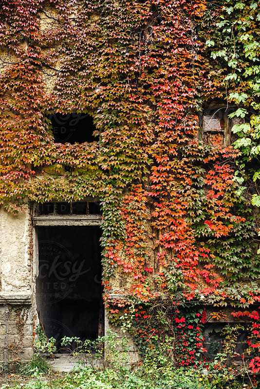 Overgrown facade by Pixel Stories for Stocksy United