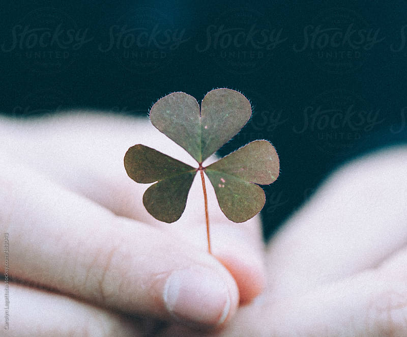 Close up of a perfect three leaf clover being held by a little girl by Carolyn Lagattuta for Stocksy United