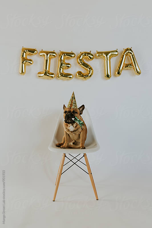 Fiesta Balloon Letters and French Bulldog Puppy Wearing a Party Hat by Rachel Gulotta Photography for Stocksy United