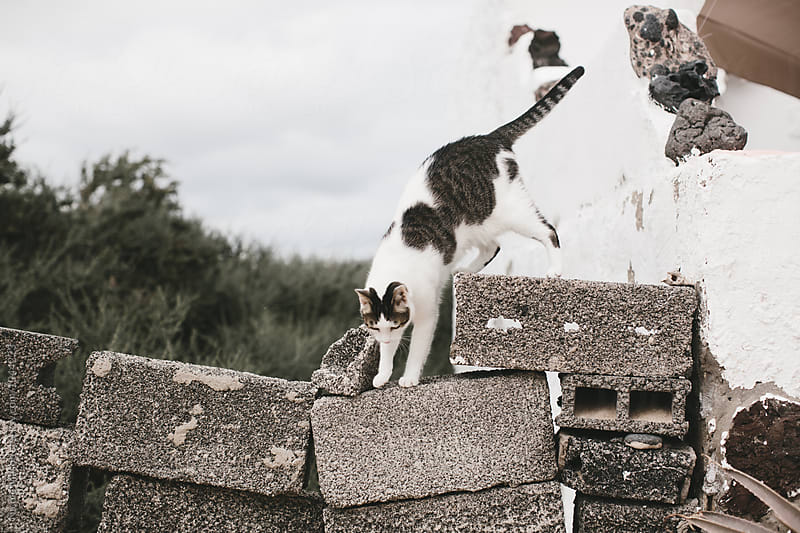 cat walking on ledge outside of island house by Nicole Mason for Stocksy United