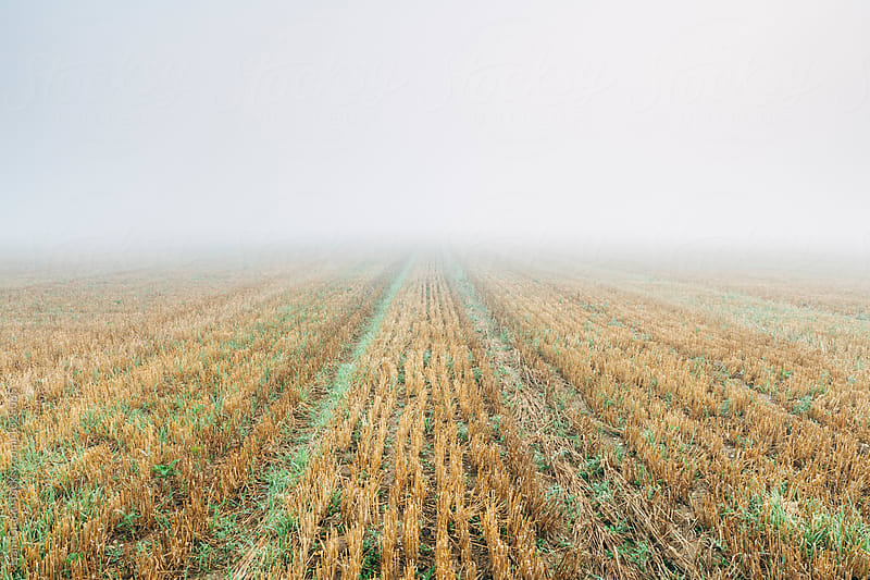 Dense fog over a stubble field at dawn. Norfolk, UK. by Liam Grant for Stocksy United