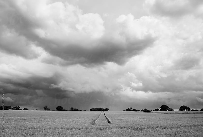 Rain storm clouds over a field of Barley. Norfolk, UK. by Liam Grant for Stocksy United