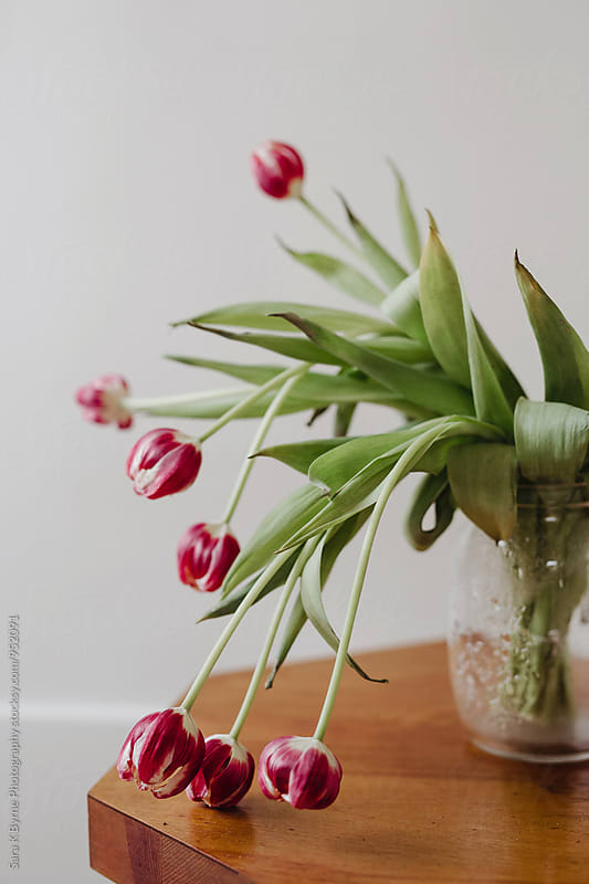 Wilting Flowers by Sara K Byrne Photography for Stocksy United