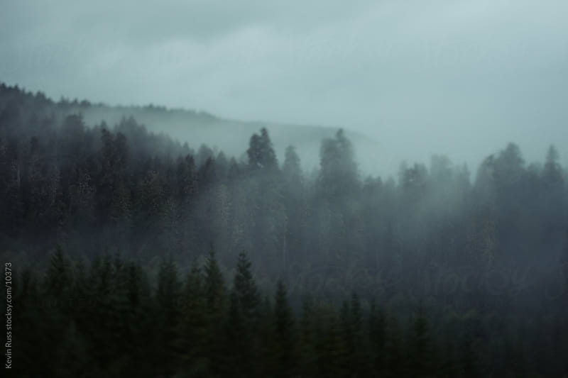 Tilt Shifted Foggy Forest by Kevin Russ for Stocksy United