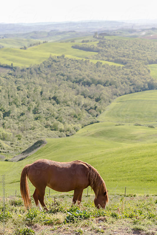 Horse grazing in tuscan countryside by Marilar Irastorza for Stocksy United
