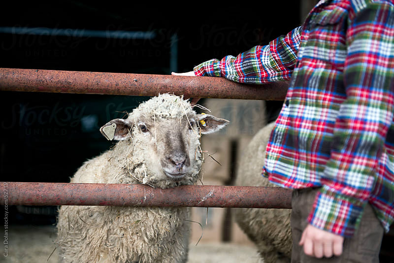 Boy on farm hangs out with a sheep by Cara Slifka for Stocksy United