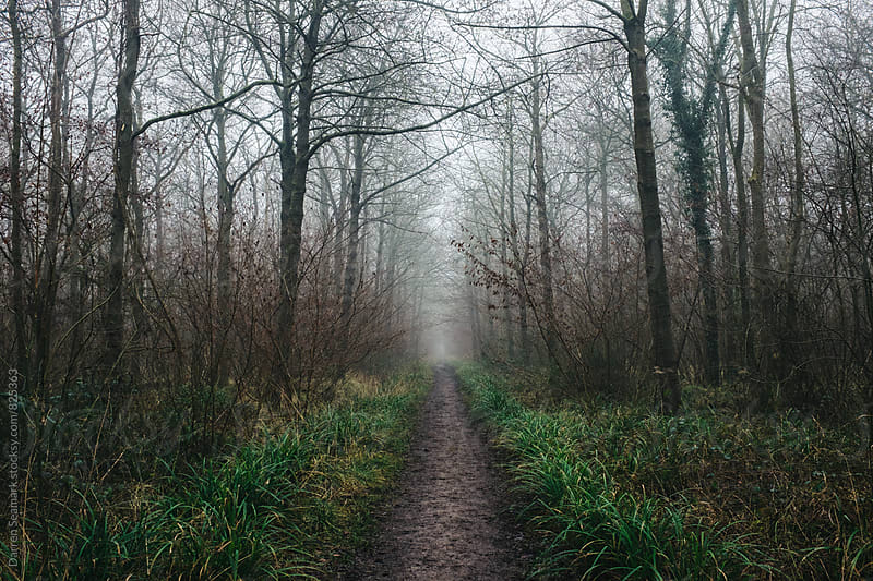 A well-trodden path through a misty forest by Darren Seamark for Stocksy United