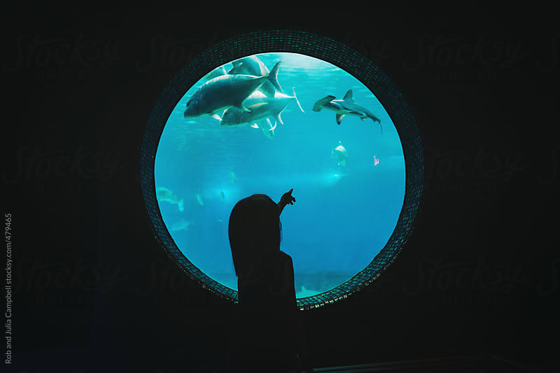Young girl pointing at fish and shark in aquarium tank by Rob and Julia Campbell for Stocksy United
