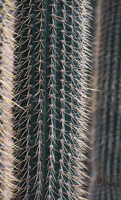 Tall vertical cactus plants close up by Marcel for Stocksy United