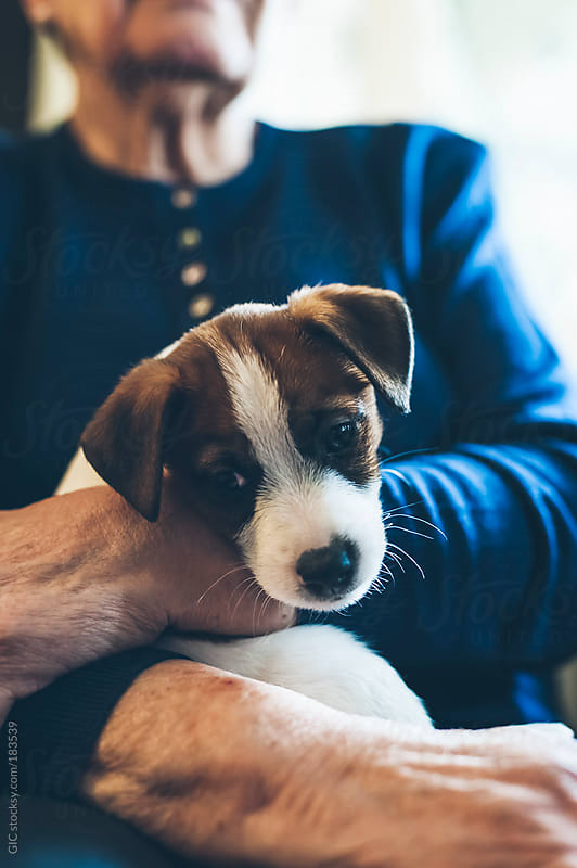 Puppy looking in camera sitting on a senior woman by GIC for Stocksy United