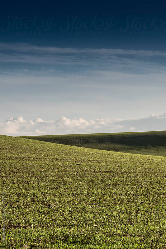 landscape with green field with a blue sky by Javier Pardina for Stocksy United