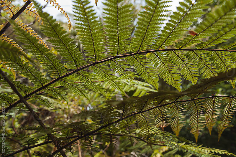 Fern in spring. by Robert Zaleski for Stocksy United