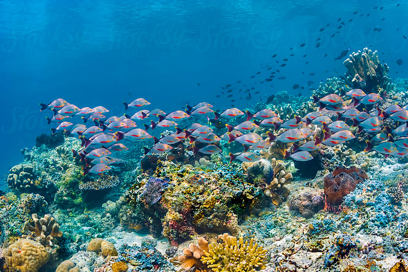 Colorful fish swimming over coral reef by Søren Egeberg Photography for Stocksy United