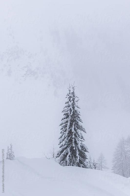 lonely tree in winterlandscape by Leander Nardin for Stocksy United