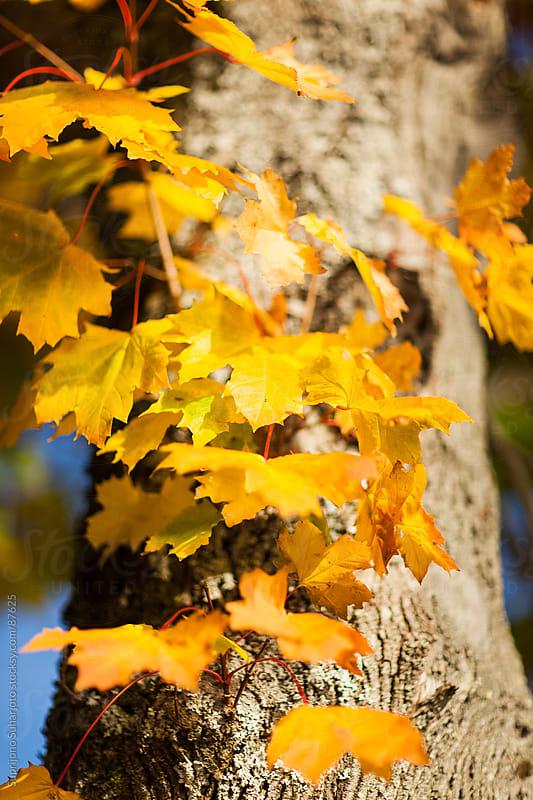 Autumn leaves by Suprijono Suharjoto for Stocksy United