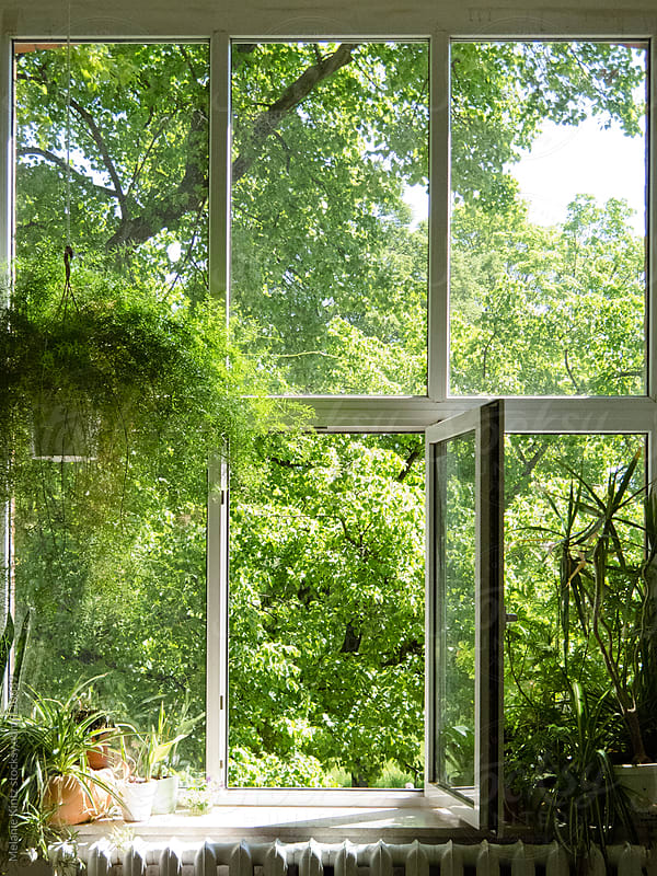 Window with green plants inside and out by Melanie Kintz for Stocksy United