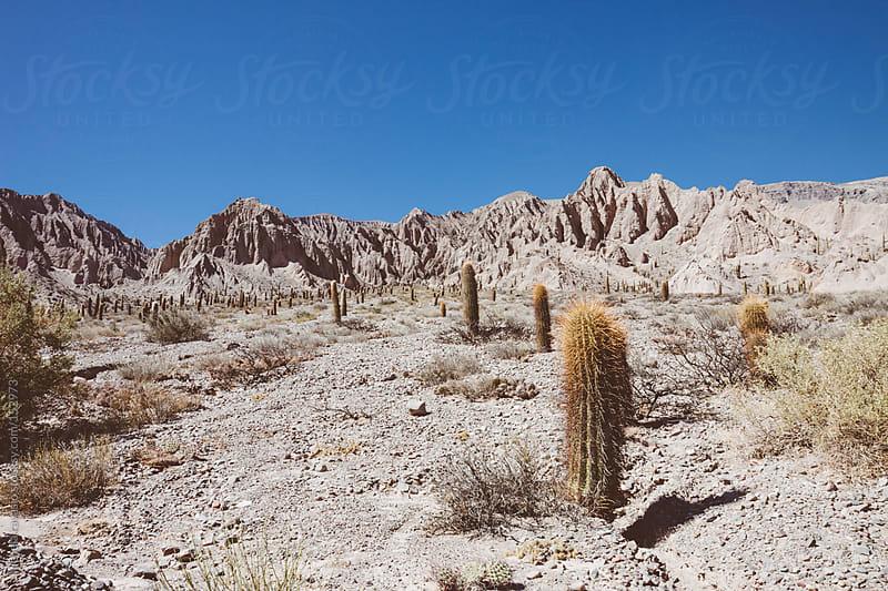 Cactus landscape by michela ravasio for Stocksy United