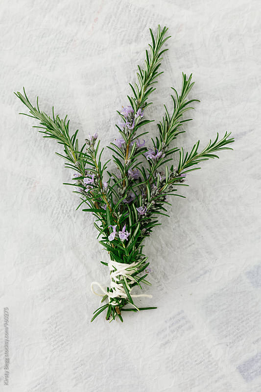 Bouquet of fresh rosemary with purple flowers, tied with string by Kirsty Begg for Stocksy United