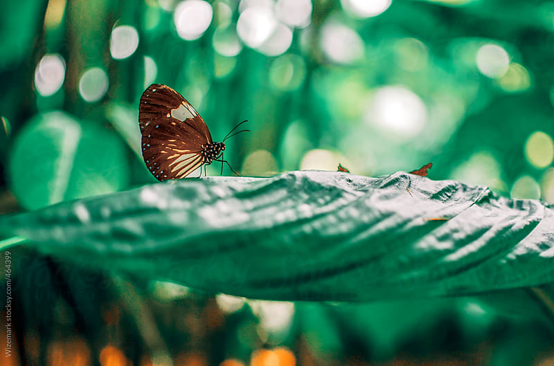 Butterfly on the green leaf by Wizemark for Stocksy United