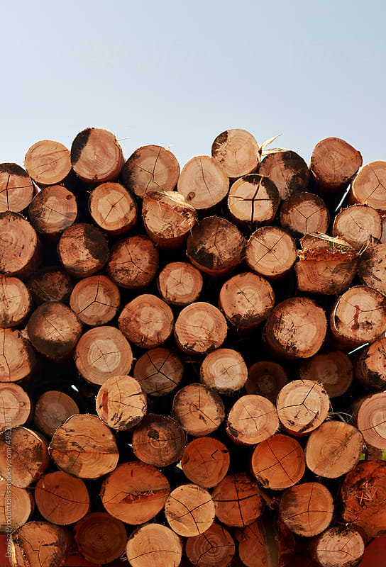 stacked logs by Daxiao Productions for Stocksy United