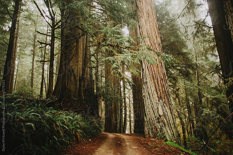 Redwood path by Dylan M Howell Photography for Stocksy United