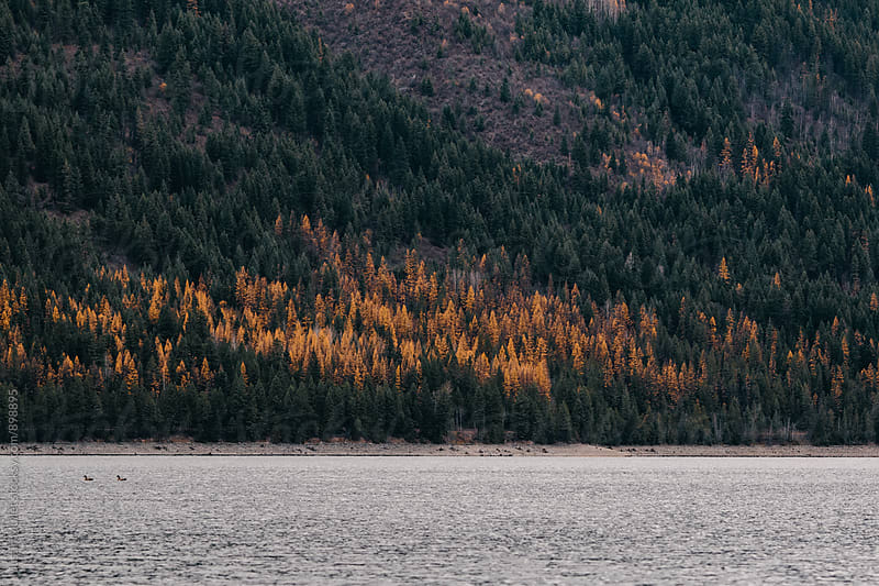 Sullivan Lake, Washington by Justin Mullet for Stocksy United