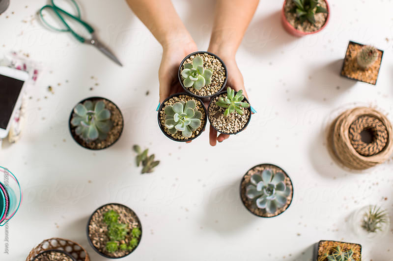 Hands holding pots with succulents on a white background  by Jovo Jovanovic for Stocksy United