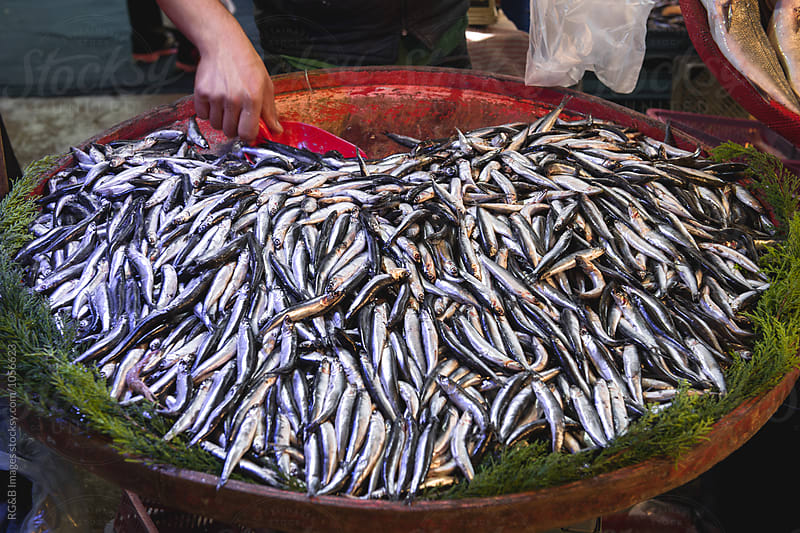Fresh sardines in the fish market by RG&B Images for Stocksy United